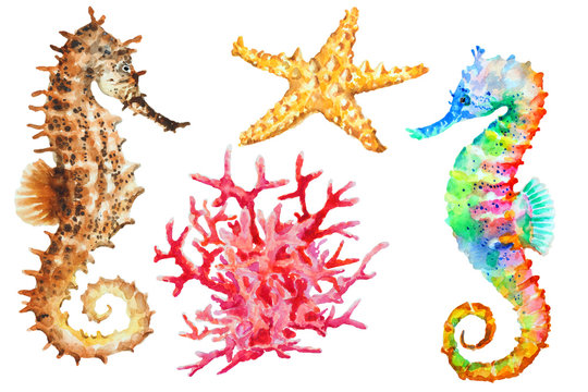 Group of colorful seahorses, red coral and starfish, watercolor.