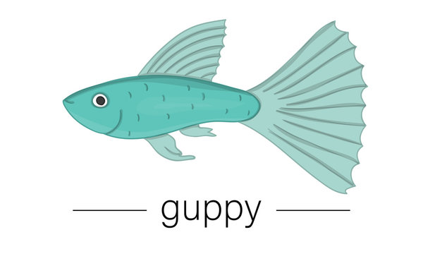 Vector colored illustration of aquarium fish. Cute picture of guppy for pet shops or children illustration