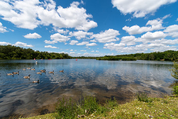 Horseshoe lake view