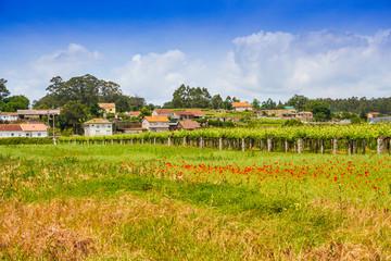 Farmlands in Oubina village