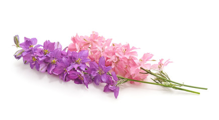 Delphinium flowers isolated.
