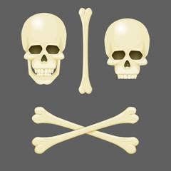 Skulls, crossbones and a single bone. Vector illustration. Jolly Roger. Pirate, anatomy, danger, poison symbol.