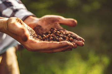 farmer hands holding the seeds to plant them into soil