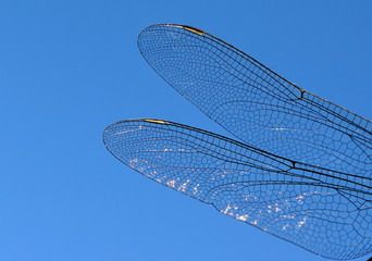 dragonfly wings abstract wildlife