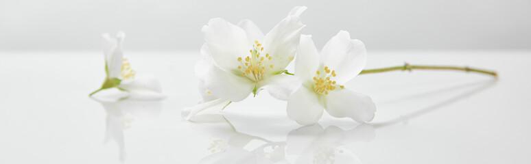 panoramic shot of jasmine flowers on white surface Wall mural