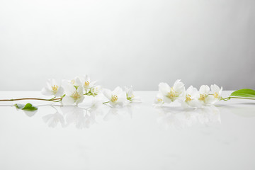 fresh and natural jasmine flowers on white surface Wall mural