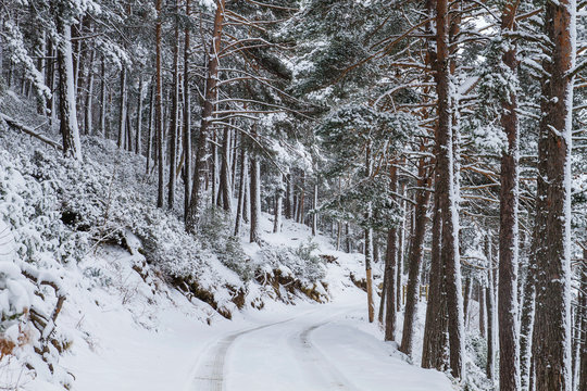 Road across the snowy forest in winter
