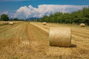 Strohrollen auf einem abgemähten Feld