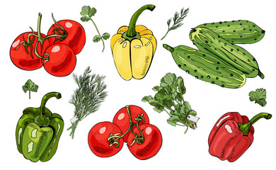 Assorted of vegetables and bundles of  herbs. Tomatoes, cucumbers, peppers and herbs isolated on white background.