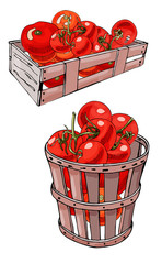 Set of box and basket with  hand drawn red tomatoes. Ink and colored sketch. Color objects isolated on white background.