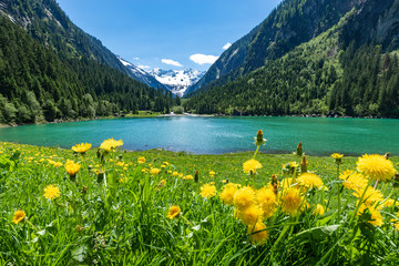 Wall Mural - Alpine flowers meadow with mountain lake and mountains range in the background. Austria, Tyrol Region