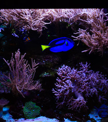 Wall Murals Coral reefs Freshwater and marine Aquarium with fish, plant, schrimp and more