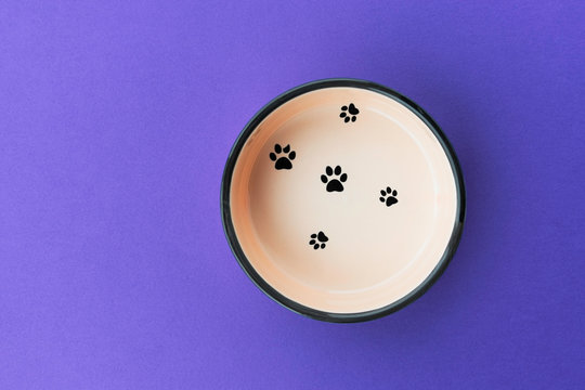 beige bowl for pet animal on blue background, concept of caring for Pets
