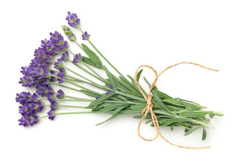 Papiers peints Lavande Lavender Flowers Bunch Isolated On White Background