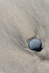 Solitary Sea Scallop Shell in the Sand - Vertical Format