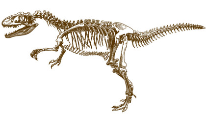engraving illustration of tyrannosaurus skeleton
