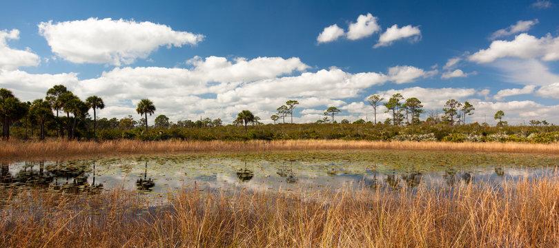 Scene of pond in Jonathan Dickinson State Park, Florida
