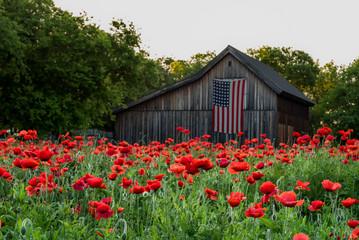 Canvas Prints Poppy Garden of vivid red poppies