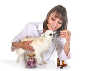 alternative medicine for dog