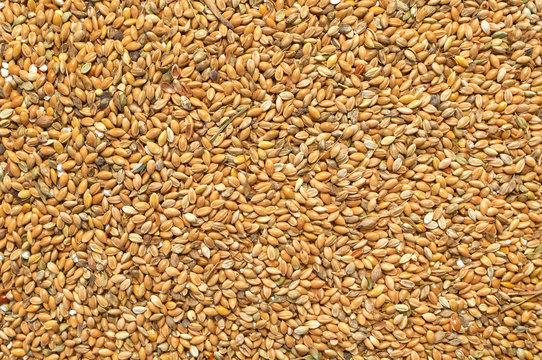 Background texture of crushed seed and grain mix for livestock and bird feed