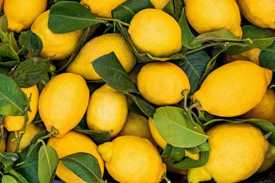 Fresh juicy lemons on the farmers market