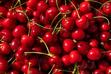 freshly collected cherries