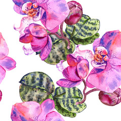 Orchid floral botanical flower. Watercolor background illustration set. Seamless background pattern.