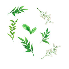 Set of decorative green leaves and brancehs and whte flowers isolated on white background. Hand drawn watercolor illustration.