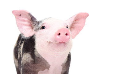 Portrait of a cute cheerful pig isolated on white background Wall mural