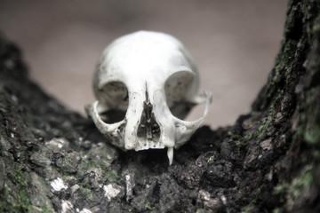 skull as a symbol of death