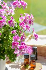 essential oils with rose geranium flower at spa salon