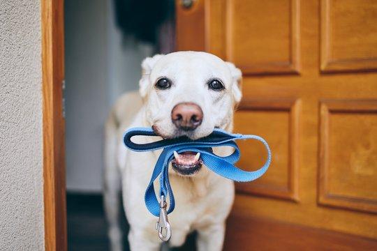 Dog waiting for walk