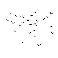 birds vector silhouette