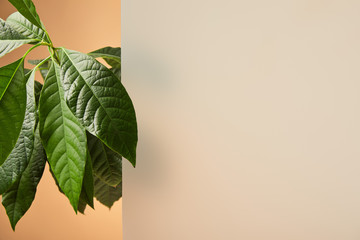 leaves of plant near matt glass isolated on beige