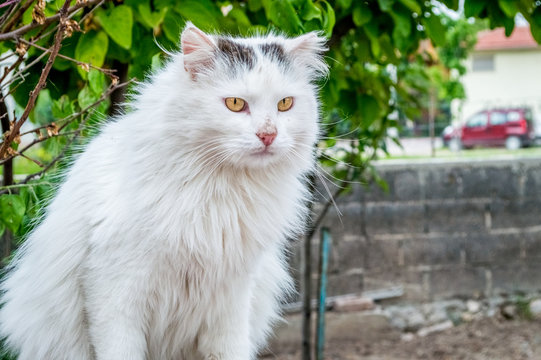 Portrait of a white dirty stray cat with yellow eyes sitting on the wall