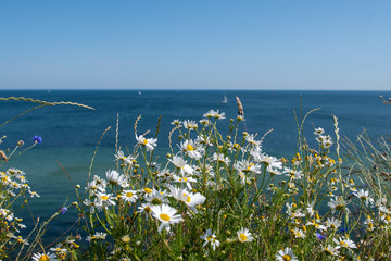 flowers on the beach - Schleswig Holstein Germany