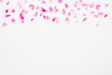 abstract background with pink petals