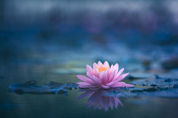 Garden Poster Lotus flower Water Lily Floating On The Water