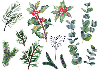 Set of holly berry plants, eucalyptus leaves, pine, spruce and fir branches. Watercolor illustration on white background. Isolated elements for design.