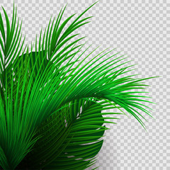 Green tropical plants isolated on transparent background.
