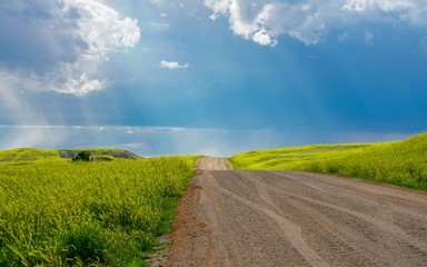 Rays of sunshine shining down on a country road and fields of yellow wildflowers and green grass