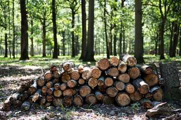 Pile of wood cut from a forest