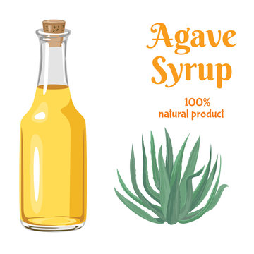 Agave Bright Syrup in glass bottle isolated on white background. Vector illustration of sweet nectar, Blue agave plant in cartoon flat style. Natural sweetener.