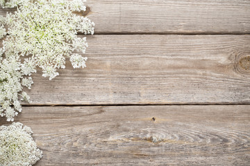 white wildflowers on old wooden background