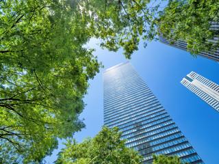 Fotomurales - 新緑の新宿高層ビル街