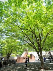 Fototapete - 初夏の新宿高層ビル街