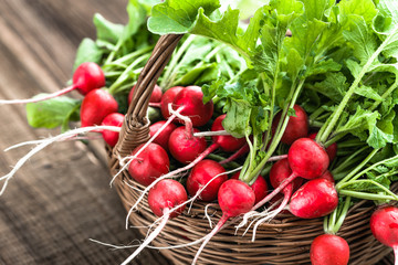 Fototapeta Farm fresh vegetables. Organic, freshly harvested radishes on farmer market. Red radish bunch. obraz