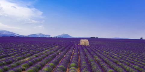 Papiers peints Aubergine champ de lavande, Provence en france