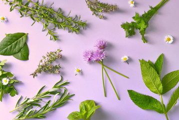 top view on various aromatic fresh herbs with little daisies on pink background