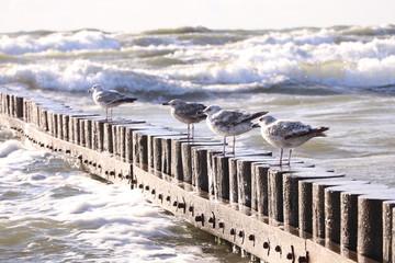 Falochron - Ptaki nad morzem